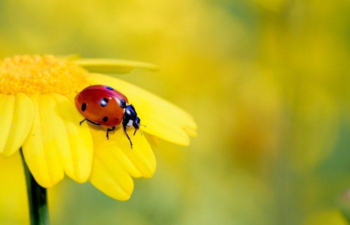 【林映彤】PHEDO遛哲學 #51 – 昆蟲:有意識的外星人,還是設計精良的機器?(主講:楊恩誠、林映彤)